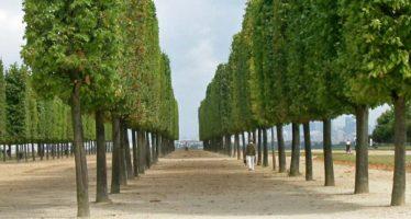 Tailles d'arbres à Vendôme