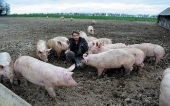 Paul-Emmanuel Boulai, éleveur porcin à Azé, rejoint Le Bottin Gourmand
