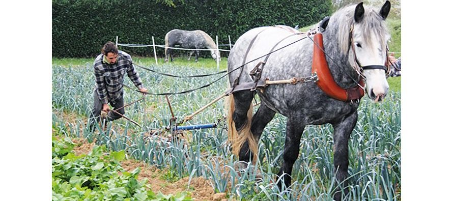 Manger bio et local, tout en soutenant l'installation de jeunes  producteurs : un nouveau départ pour le GAC Vendôme