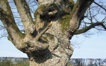 L'arbre, tout un poème