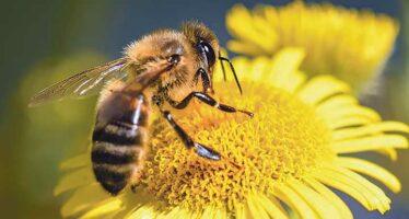 Le Pays Vendômois au chevet des abeilles