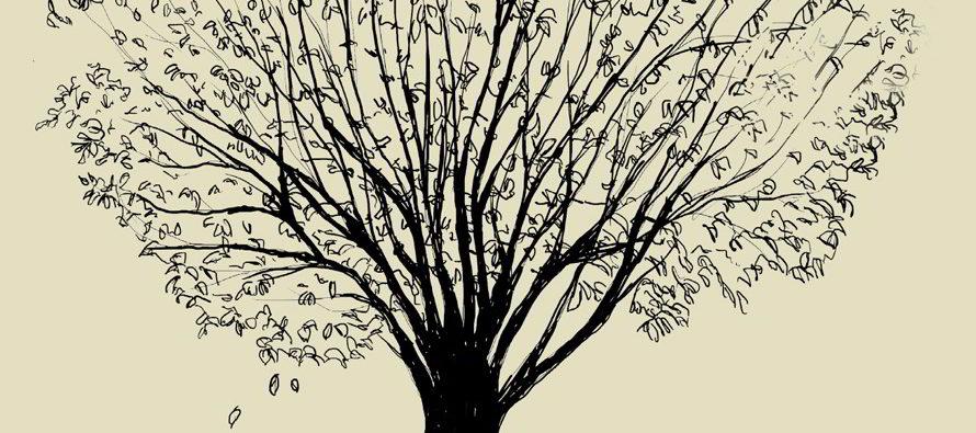 Conférence l'arbre et le territoire