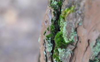 Le bien-être par les arbres