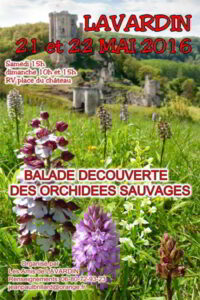 balade-orchidees-sauvages-affiche