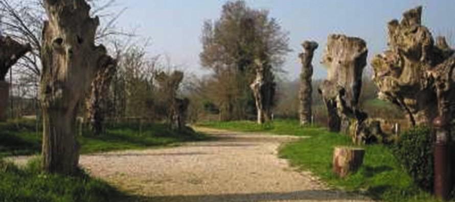 Les trois chemins, depuis la Maison Botanique, 1 seul chemin pour 3 regards.
