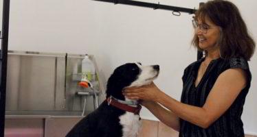 Cabanocabo pour prendre soin de son chien