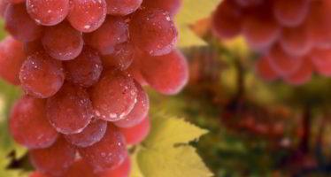 La Fête des vins pour sa 35e édition