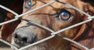 Protection animale et confinement