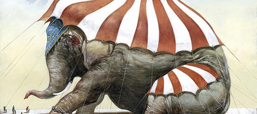Animaux de cirque : le code a changé