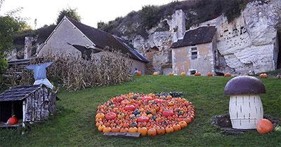 Halloween ; cucurbitacées ; citrouilles