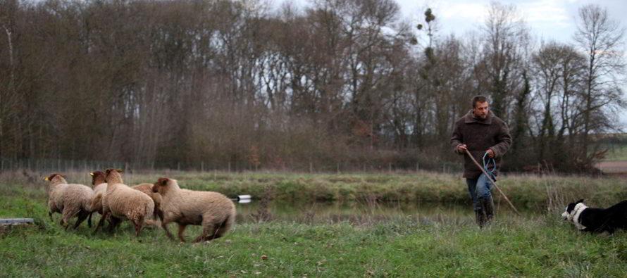 La filière ovine se met en place en Vendômois