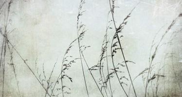 Exposition de Photographies de Véronique Dandeker