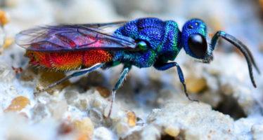 Photographie: un travail de fourmi