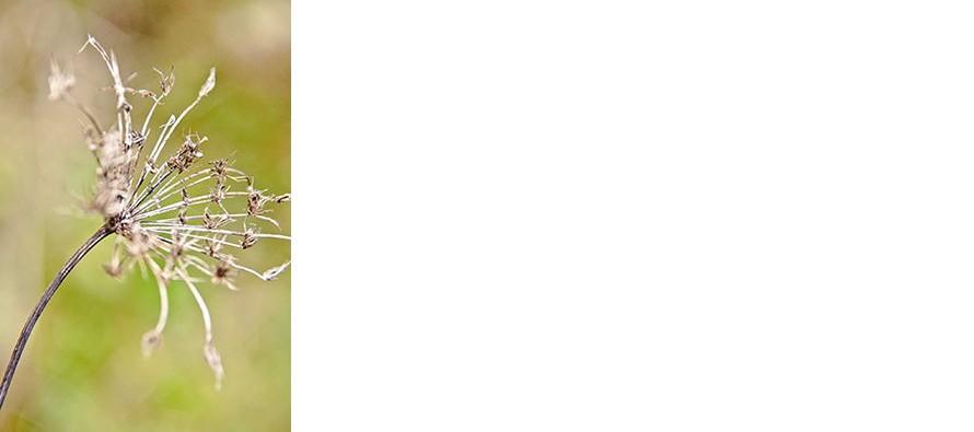 Rêve de peinture photographique : du 18 juin au 10 septembre – Vendôme