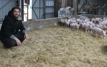 De l'élevage à l'assiette