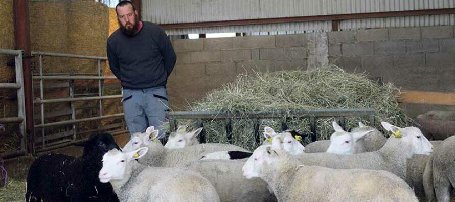 La Ferme de Villavard,  pédagogie et production d'agneaux bio