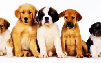 Pour tous les amoureux des chiens