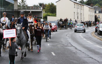 Des chevaux sur l'asphalte