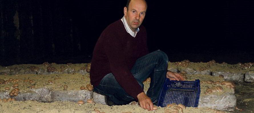 Terroir et tradition, champignons bio en Vendômois