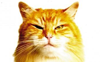 Mon chat a mauvais caractère