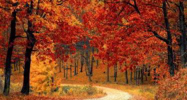32e fête des arbres, salon de l'artisanat et de la gastronomie