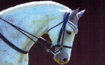 Concours officiel de dressage au Centre Équestre «NAVEIL EQUITATION»