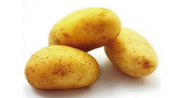 Le légume préféré des Français : La pomme de terre, trésor du Pérou