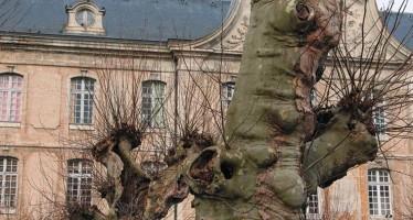 Plus de platanes au quartier Rochambeau….