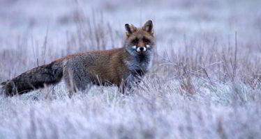 Regards Nature sur la faune d'ici et d'ailleurs