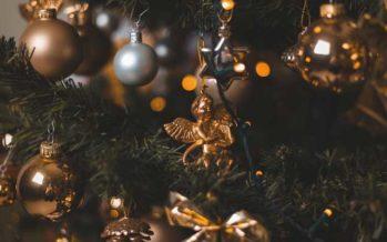 Un deuxième usage aux sapins de Noël coupés