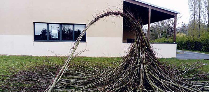 «Branches de tilleul», Les trognes à l'honneur à St Firmin