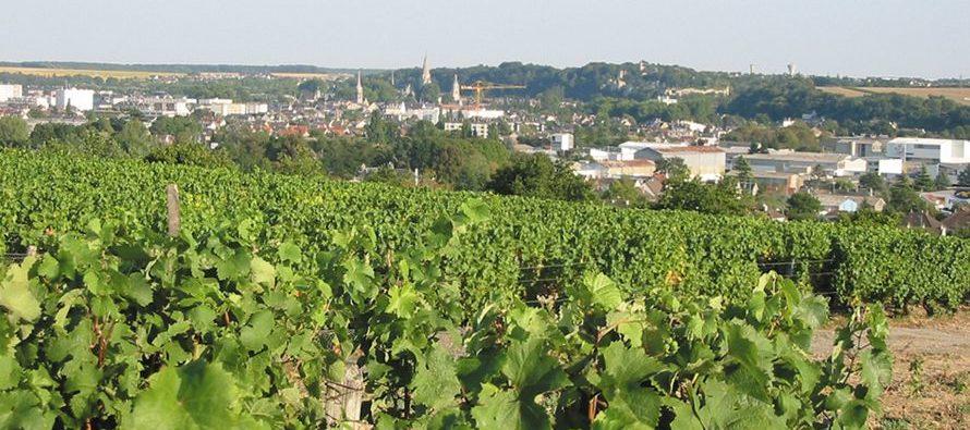 «Vignes et vins bio en Loir-et-Cher»
