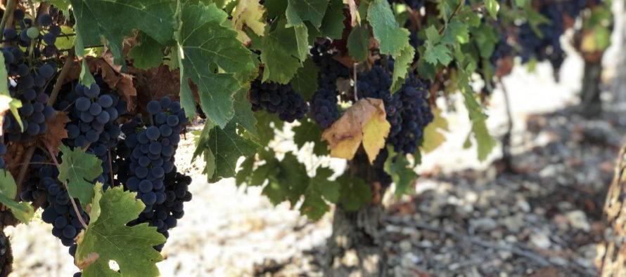 Vignes, Vins, Randos en Vendômois
